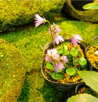 鉢植イメージ