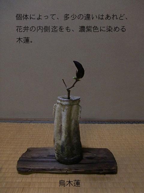 CIMG8746ブログ