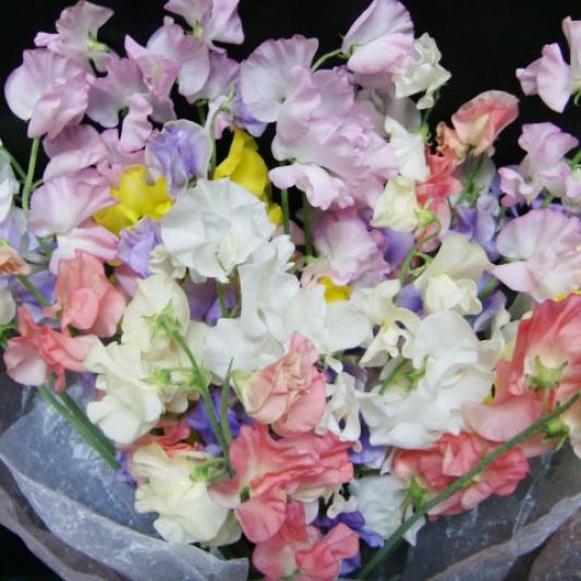 スイートピーの花束 11-SP-1