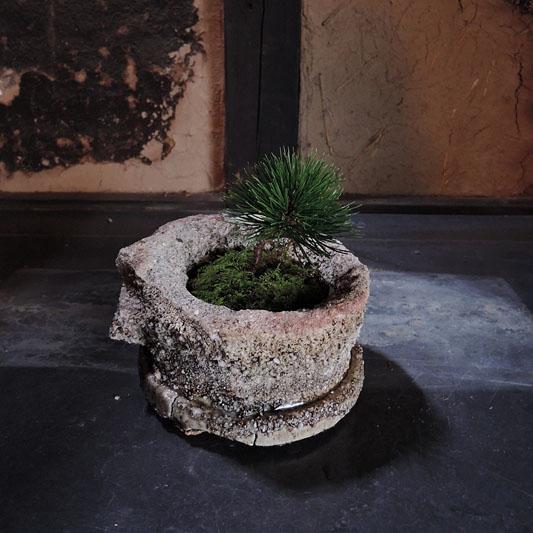窯サヤと植物 14-WI-3 (1個)