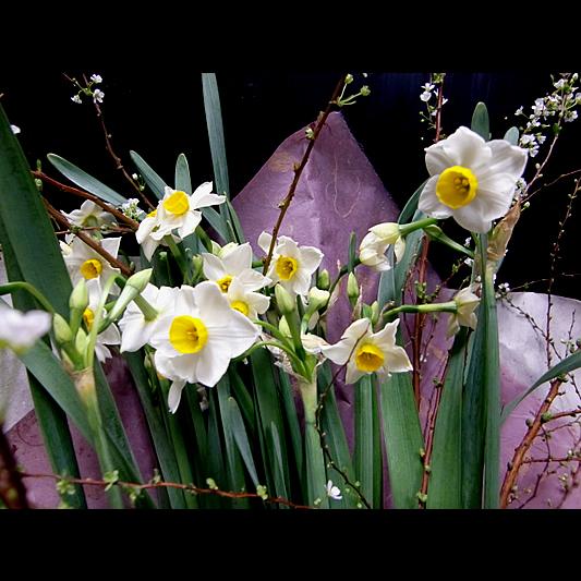 水仙の花束 10-WI-1