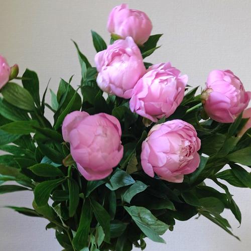 芍薬の花束 21-SU-1